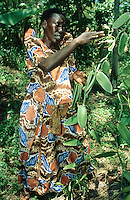 Uganda. Kayunga district. Nnongo. The farmer Florence Badaaza, wearing a typical colorful african dress, takes in her hands vanilla to make the pollination of the flower.© 2004 Didier Ruef