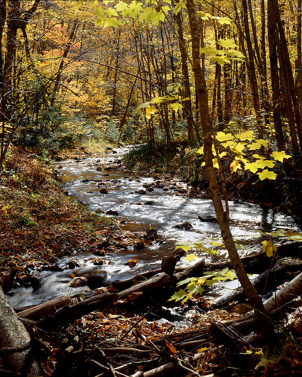 Morgan Creek, Chequamegon National Forest, Wisconsin, September, 1989