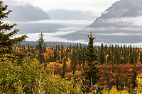 Fall landscape of fog along Chugach Mountains with fall colors of yellow and red of willows in the Glacier View area of Glenn Highway.  Alaska<br /> <br /> Photo by Jeff Schultz/SchultzPhoto.com  (C) 2018  ALL RIGHTS RESERVED<br /> <br /> 2018 Bears, Glaciers and Fall Colors Photo tour/workshop