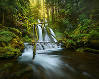 A waterfall through an old growth forest on the Washtington side of the Columbia Gorge.