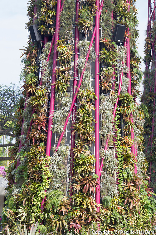 Supertree , man made tree about 100 feet all feet tall with vegetation growing on the trunk, including many bromeliads.Gardens by the Bay.Singapore