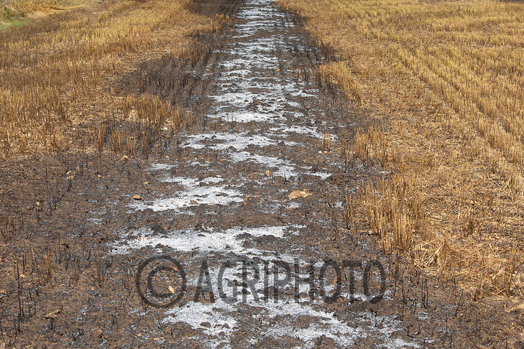 24.7.2020 Linseed stubble after burning the straw <br /> ©Tim Scrivener Photographer 07850 303986<br />      ....Covering Agriculture In The UK.