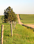 A long dirt road cuts a path through the Pawnee National Grasslands in northeastern Colorado.