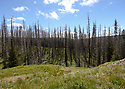 Scenery at Blewett Pass, in the Wenatchee Mountains featuring old burned forest, green grass and blue sky. Stock photography by Olympic Photo Group