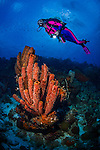 29 January 2016:  SCUBA Diver Sally Herschorn explores the reef, observing a variety of coral and sponges at Captain Don's Habitat in Bonaire. Bonaire is known for its pioneering role in the preservation of the marine environment. A part of the Netherland Caribbean Islands, Bonaire is located off the coast of Venezuela and offers excellent scuba diving, snorkeling and windsurfing.  Mandatory Credit: Ed Wolfstein Photo *** RAW (NEF) Image File Available ***