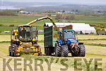 Kevin Lynch in his Silage harvester with Chris White along side, as they harvest silage on the the farm of Martin Lynch in Ballylongford on Saturday