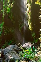 Pololu valley Small waterfall deep in the valley The Big Island of Hawaii