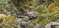 McGrath Creek in Arthur's Pass, Arthur's Pass National Park, Canterbury, South Island, New Zealand, NZ