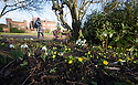06/02/15<br /> <br /> Despite weeks of cold weather, early signs of spring are still emerging at Hodsock Priory, Blyth, Nottinghamshire<br /> <br /> <br /> All Rights Reserved - F Stop Press.  www.fstoppress.com. Tel: +44 (0)1335 418629 +44(0)7765 242650