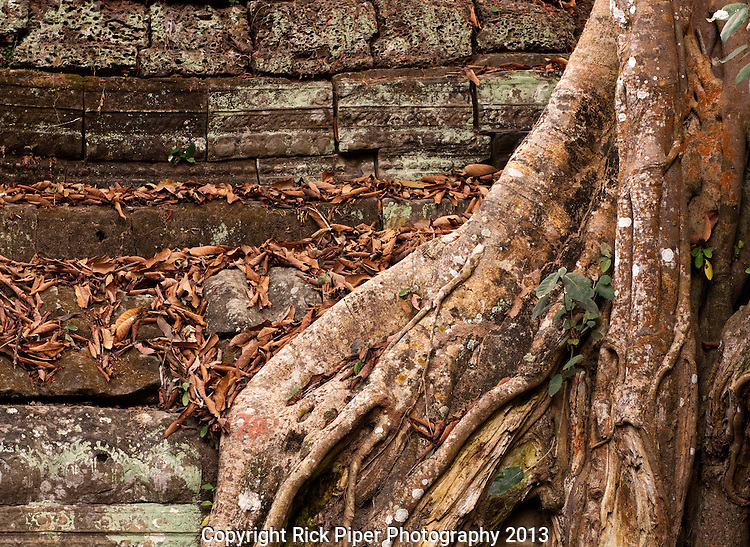 Ta Prohm Roots And Stone 17 - Silk-cotton tree roots growing over the walls of Ta Prohm Temple, Angkor, Cambodia