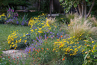 Mixed border with annuals, perennials, grasses, (poppies, penstemon, achillea, stipa) by small lawn in Habets garden, Pleasant Hill, California