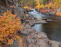Shasta National Forest, CA: McCloud River in fall