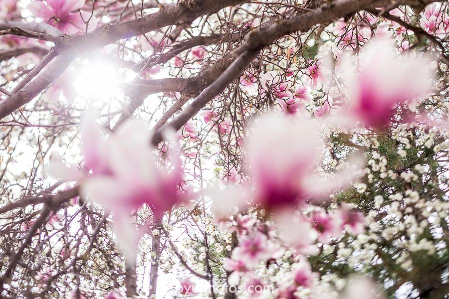 1703-48 GCS Spring 0026<br /> <br /> 1703-52 GCS Spring<br /> <br /> March 21, 2017<br /> <br /> Photography by Nate Edwards/BYU<br /> <br /> © BYU PHOTO 2016<br /> All Rights Reserved<br /> photo@byu.edu  (801)422-7322