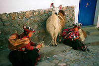 Peruvian women in native costume with their llamas, Cuzco, Peru