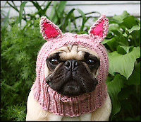BNPS.co.uk (01202 558833)<br /> Pic: JessicaFurtado/BNPS<br /> <br /> ***Please use full byline***<br /> <br /> Pug in a pig hat<br /> <br /> Barking mad entrepreneur Jessica Lynne has set tails wagging after launching her own fashion line for pug dogs. The 22-year-old's hand knitted hats and costumes transform the cute canines into characters such as a ladybird, an alien, an aviator, Batman and even Minnie Mouse. Dog-mad Jessica was inspired to launch her canine couture after knitting her adopted pug a wacky hat to keep him warm through cold winters. The Snuggly Pug Alien hat was such a hit with fellow pug owners she founded her company All You Need is Pug while still studying for a university degree in English. Her crazy creations have also had the thumbs up from the dinky dogs themselves, who are happy to parade them with pride.