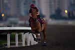 04-25-19 Hong Kong Trackwork