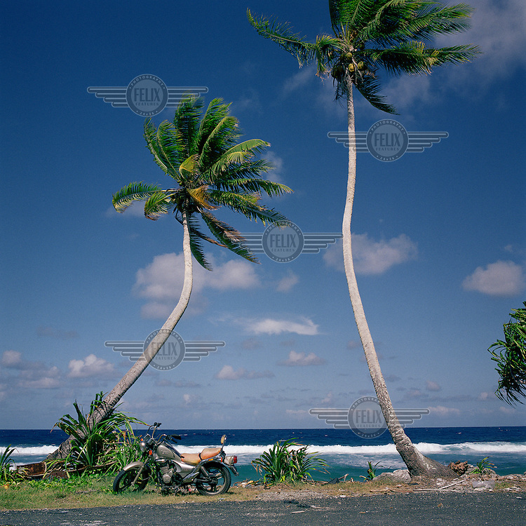 A motobike sits next to palm trees on the shore.