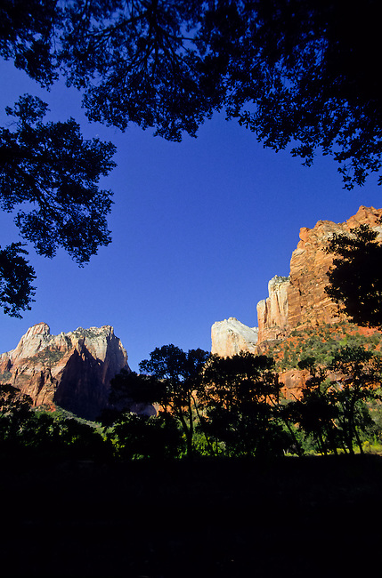 mountains seen through trees in Zion National Park, Utah, USA