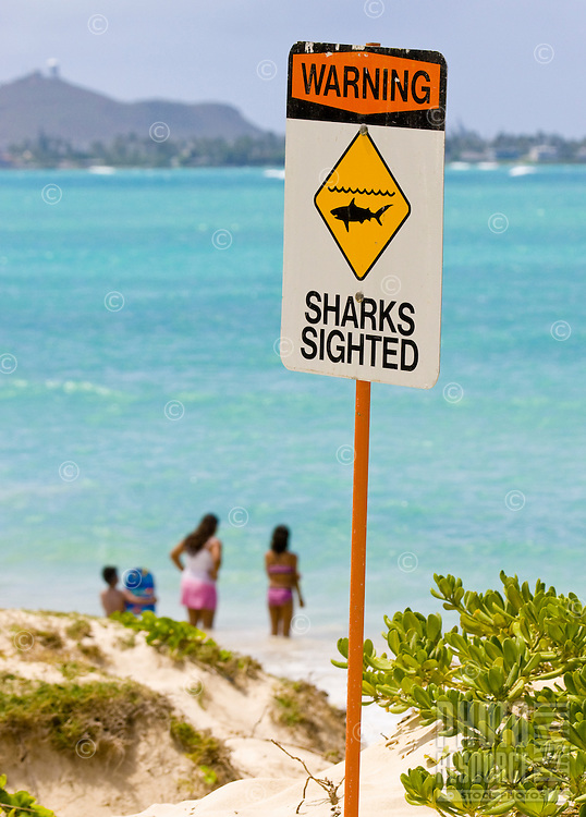 A group of kids contemplate jumping in for a swim after the city issues a (rare) warning for a shark sighting.