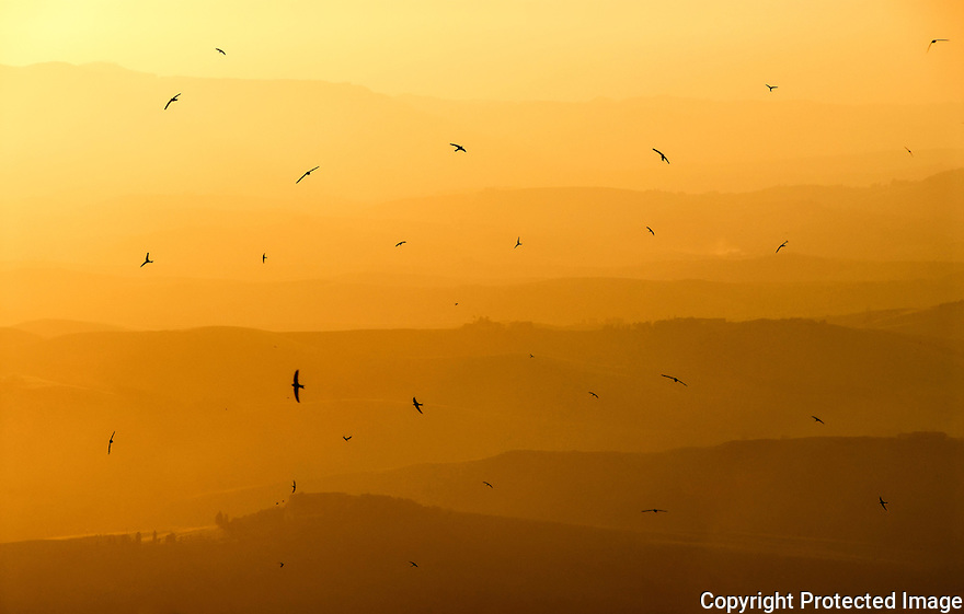Flying birds in a Toscana sunset