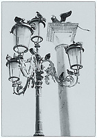 Pigeons on ornate street lamps