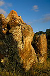 Lichen covered rock at sunset, Mount Diablo State Park, California