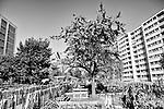 Gen&egrave;ve, le 20.09.2017<br /> Inauguration de la Place de jeux et des potagers urbains de Champ-d'Annier au Chemin de Coudriers.<br /> Le Courrier / &copy; C&eacute;dric Vincensini