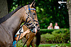 Stormy Situation before winning at Delaware Park on 8/21/14