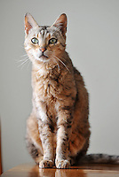 "Pictured: Saffie the cat.<br /> Re: A family has been reunited with their cat eight years after she went missing.<br /> Saffie went missing from her home in Sandfields in Port Talbot in 2008 while her owner, Lisa Darney was away on holiday.<br /> The 44-year-old searched for years for Saffie, but was never able to find her and had begun to give up hoping that they would be reunited.<br /> But, earlier this week, Lisa received a phone call from a couple in Nant Y Moel in Bridgend who had found Saffie at their allotment.<br /> Now, Saffie has been reunited with her family.<br /> ""We got Saffie in 2005 as a Christmas present. She was only two months old at the time, and we absolutely adored her,"" Lisa said.<br /> ""I went away on holiday in September 2008 and I left my son to look after the animals, but she got out of the house and over the fence. We were devastated."