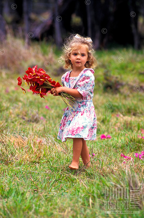 A small girl gathers anthuriums from a field on the Big Island of Hawaii.