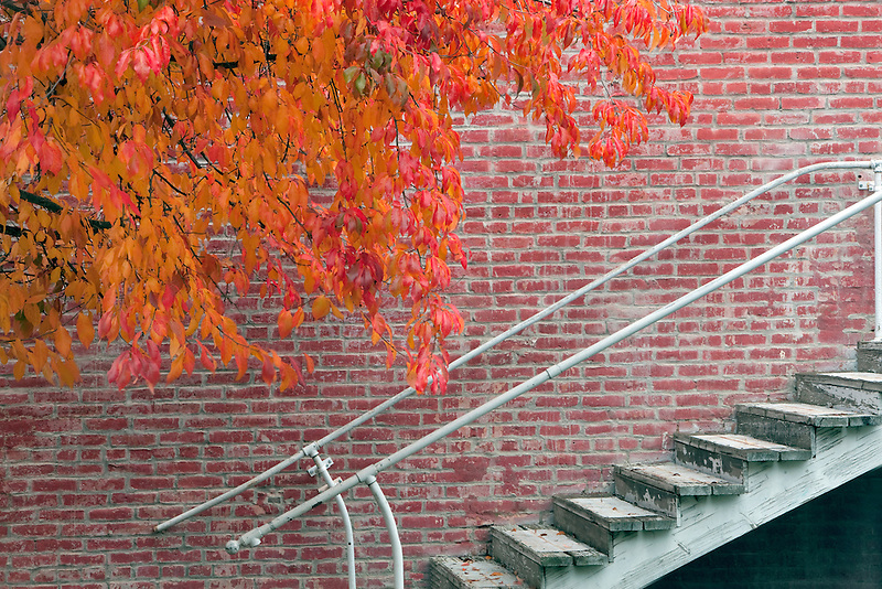 Fall color next to brick building and stairs. Jacksonville, Oregeon