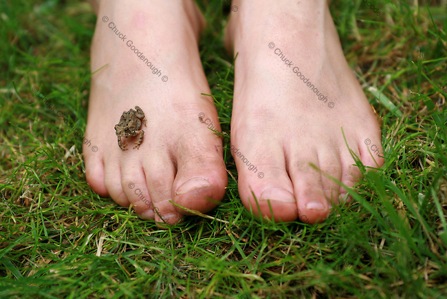 Photo of a Baby Toad Perched on a little Boy's Dirty Feet in the Grass.