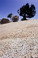 two small pinetrees and two rocks on top of a granit mountain in Yosemity