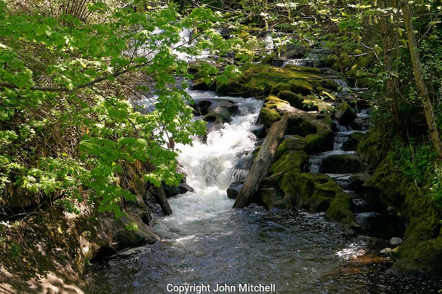 Rushing water in Whatcom Creek, Maritime Heritage Park, Bellingham, Washington state, USA