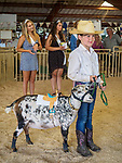 Livestock Beauty Pageant, Saturday at the 80th Amador County Fair, Plymouth, Calif.<br /> .<br /> .<br /> .<br /> .<br /> #AmadorCountyFair, #1SmallCountyFair, #PlymouthCalifornia, #TourAmador, #VisitAmador