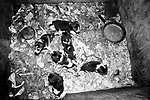 Puppy Farming Wales 1989. A litter of Beagles.<br /> <br /> The Davies family run farm at Llwch-yr-hal near Newcastle Emlyn. Many of their dogs in shocking conditions, with out water, and heat in cold, damp and dark breeding pens.