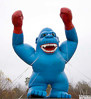 Blue Boxing Ape in Alabama