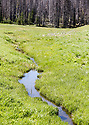 Scenery at Blewett Pass, in the Wenatchee Mountains featuring a winding meadow creek. Stock photography by Olympic Photo Group