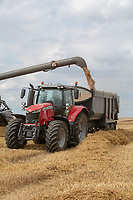 Combine unloading Wheat into a trailer <br /> &copy;Tim Scrivener Photographer 07850 303986<br />      ....Covering Agriculture In The UK....