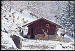 PEJO_n11 Val di Pejo in inverno, immagini dei villaggi,delle montagne, delle baite, delle piste di sci e attivit&agrave; sportive,<br /> Pejo in winter, images of the villages, mountains, mountain huts, the ski slopes and sporting activities,<br /> Pejo im Winter, Bilder der D&ouml;rfer, Berge, Bergh&uuml;tten, den Skipisten und sportlichen Aktivit&auml;ten,<br /> Pejo en hiver, les images des villages, des montagnes, des cabanes de montagne, les pistes de ski et des activit&eacute;s sportives,<br /> Pejo en invierno, las im&aacute;genes de los pueblos, monta&ntilde;as, refugios de monta&ntilde;a, las pistas de esqu&iacute; y actividades deportivas,<br /> Pejo fi fasl alshshata'a, sur min alquraa waljibal wal'akwakh aljabaliat, wamunhadarat alttazalluj wal'anshitat alrriadia,<br /> Pejo的冬天,鄉村,山區,山木屋,滑雪場和體育活動的圖像,<br /> 冬のペヨ、村、山、山の小屋、スキー場やスポーツ活動のイメージ,<br /> Pejo in de winter, beelden van de dorpen, bergen, berghutten, de skipistes en sportieve activiteiten,<br /> Pejo w zimie, obrazy wsi, g&oacute;r, schronisk g&oacute;rskich, stok&oacute;w narciarskich i uprawiania sportu,<br /> Pejo no inverno, as imagens das aldeias, montanhas, abrigos de montanha, pistas de esqui e actividades desportivas,<br /> Pejo t&eacute;len, a k&eacute;pek a falvak, hegyek, hegyi, a s&iacute;p&aacute;ly&aacute;k &eacute;s sporttev&eacute;kenys&eacute;gek