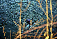 Pictured: Migrants swim through the river by the Turkish side of the border. Sunday 01 March 2020<br /> Re: Clashes between migrants and riot police at the Greek-Turkish border of Kastanies near Evros, Greece