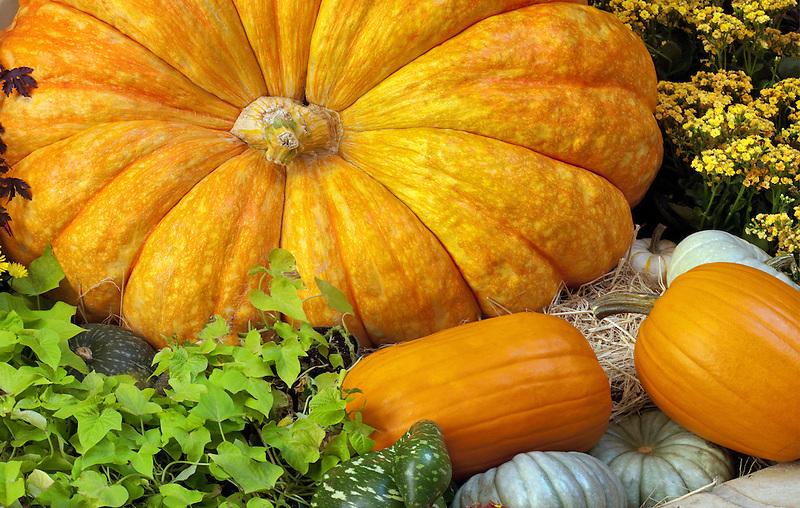 Pumpkin display.