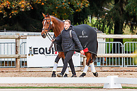 NZL-James Avery's Mr Sneezy, with groom, Louis, before the CCI5*-L First Horse Inspection. Les 5 Etoiles de Pau. Pyrenees Atlantiques. France. Thursday 24 October. Copyright Photo: Libby Law Photography