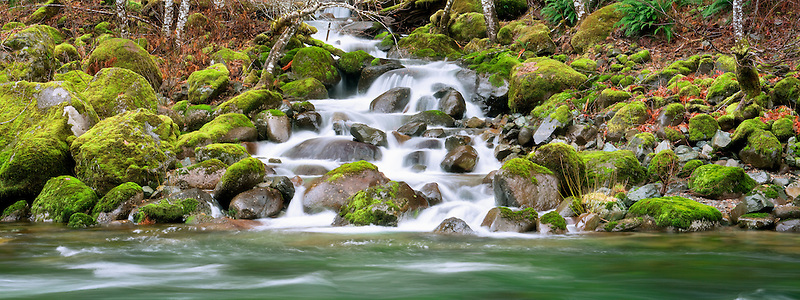 Quartzville Creek with moss and seasonal feeder stream. Quartzville Creek Wild and Scenic River. Oregon