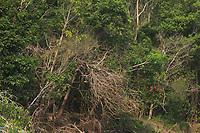 Pequenas embarcações regionais navegam pelo rio Erepecuru; na bacia do rio Trombetas, transportando moradores e produtos para os territórios quilombolas e indígenas. cujos habitantes sofrem forte pressão da indústria mineral,  com a retirada de bauxita pela Mineração Rio do Norte, o comércio ilegal dos madeireiros além do Plano Nacional de Energia 2030,  e seus projetos de 15 hidrelétricas para Bacia do Trombetas.<br /> Oriximiná, Pará, Brasil.<br /> Foto Paulo Santos<br /> 22/09/2016