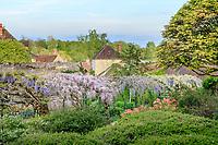 France, Cher (18), Apremont-sur-Allier, labellisé Plus Beaux Villages de France, Parc Floral d'Apremont-sur-Allier, la longue tonnelle de glycines en fleurs