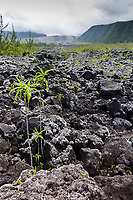 France, île de la Réunion, Sainte-Rose, Le Grand Brulé, paysage naturel de coulées de lave  //  France, Reunion island (French overseas department), Sainte Rose, Le grand Brule, natural landscape of lava flows