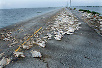 The single road that leads from the predominantly Native American community of Isle Jean Charles, covered with dead fish after hurricane Gustav swamped the coast of Louisiana. The road often floods and is in need of constant repair due to erosion. The island is clinging to life after decades of severe erosion of coastal marshes that once provided a buffer against hurricanes and high tides. Only 70 or so residents remain, down from 300 at its peak.