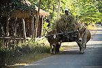 Cambodia, Rural Landscape, People