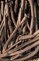 Europe/France/Languedoc-Roussillon/11/Aude/Carcassonne: Le marché BIO - Détail de l'étal de légumes de Christian Comte (Maraicher) - Détail scorconnerres